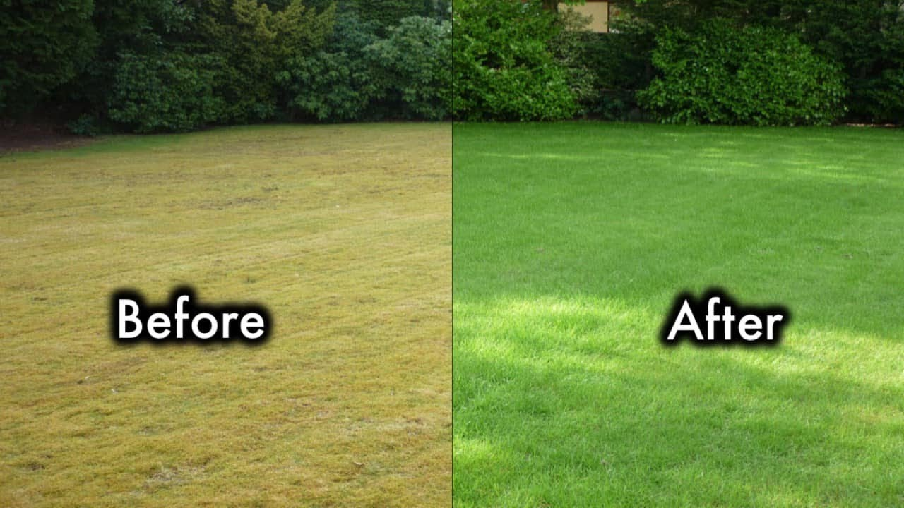 Ultimate 8 Steps To Turn Brown Grass Fast Green